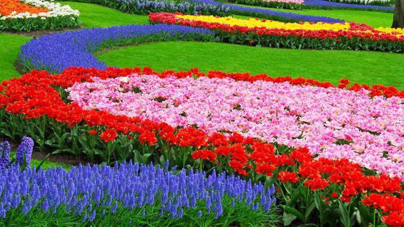 К ЕВРО 2012 в Киеве откроется цветочная выставка