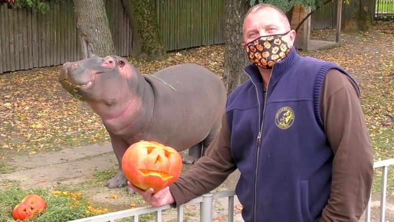 """В Киевском зоопарке готовятся к """"Зоо-Хэллоуину"""""""