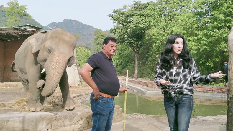 Певица Шер четыре года боролась за слона из пакистанского зоопарка