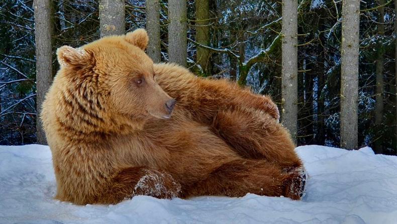 Красивые зимние пейзажи из лучших парков Украины: Опубликованы фото
