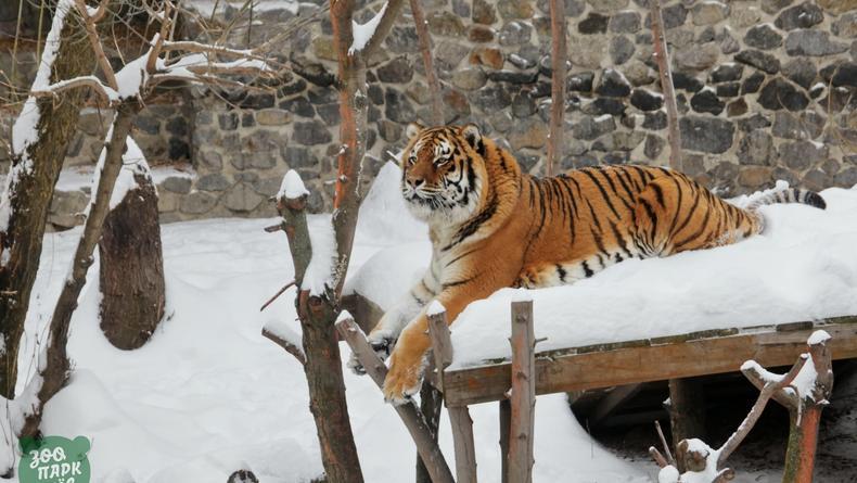 Киевский зоопарк показал реакцию животных на снег
