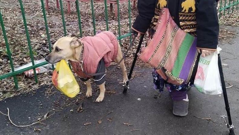 Лучший друг человека: в Запорожье пес носит сумки пожилой хозяйки