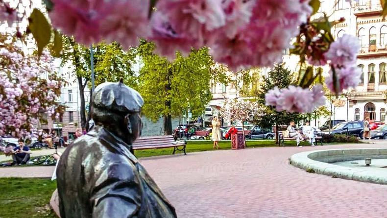 Цветение сакур в Киеве: Где насладиться прекрасными деревьями