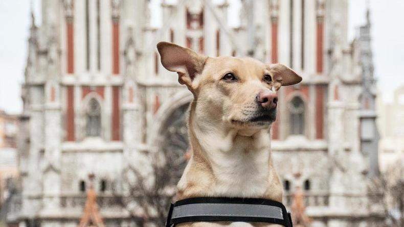 Собака Чапати из Киева посетила 30 стран