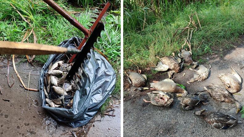 В Киеве в прудах Голосеевского парка обнаружена ртуть