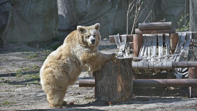 В Киевском зоопарке поведали о заклеенных бумагой трещинах на вольерах